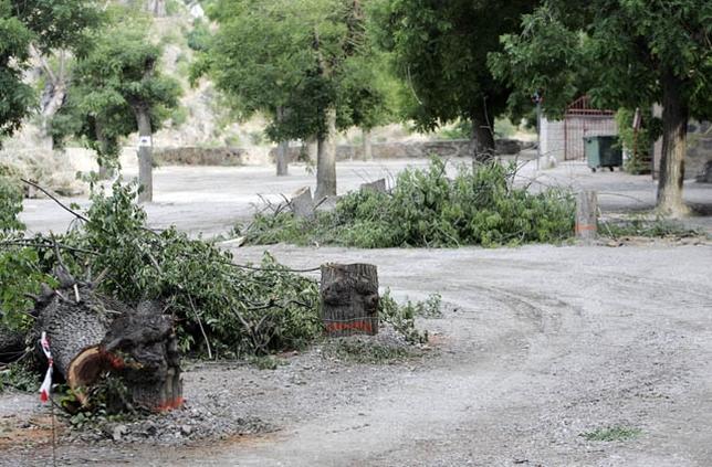 La tala de árboles se produjo en junio Víctor Ballesteros