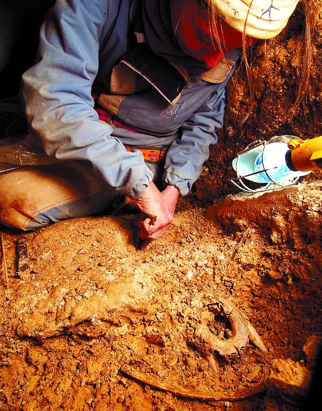 Nuria García, invetigadora del Centro Mixto de Evolución, excavando restos del Ursus Deningeri. Javier Trueba