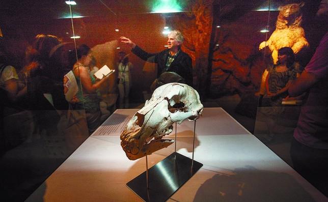 En primer término, el cráneo reconstruido; al fondo, Arsuaga explicando la exposición.  Valdivielso
