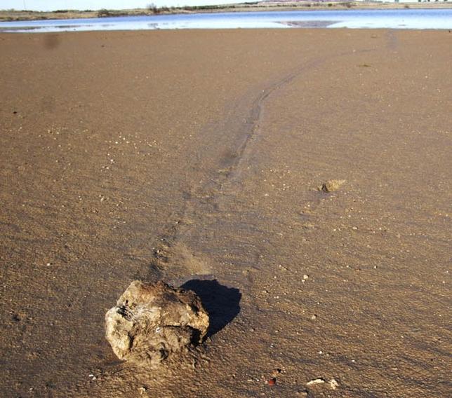 Rastro de una roca de unos dos kilos que se ha movido desde el centro de Altillo Chica subiendo una ligera pendiente.