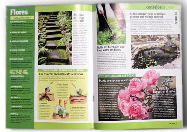 Flores durante todo el a o en el jard n diario de vila - Plantas para el jardin todo el ano ...