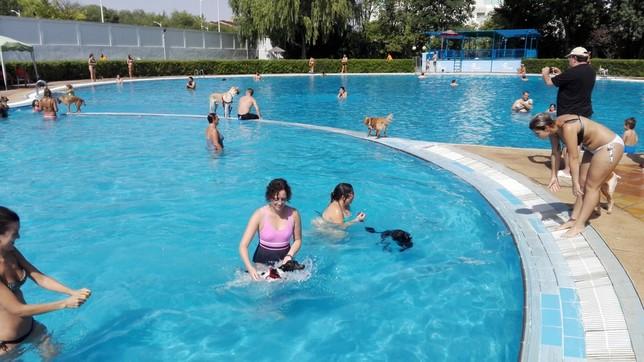 Los perros se dan un remoj n la tribuna de albacete for Piscina municipal albacete