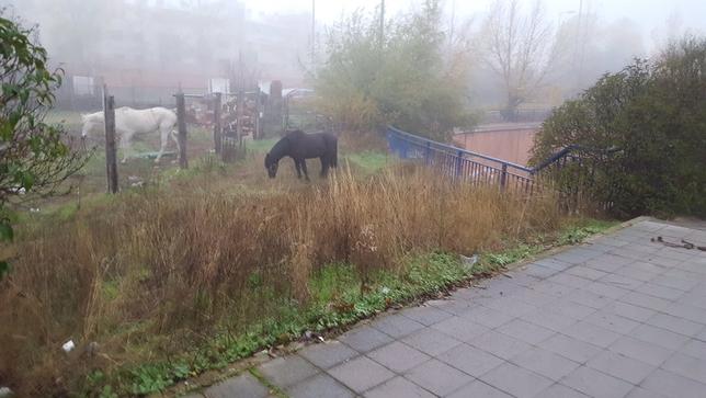 Hallan un caballo junto a la VA-20 @PoliciaVLL