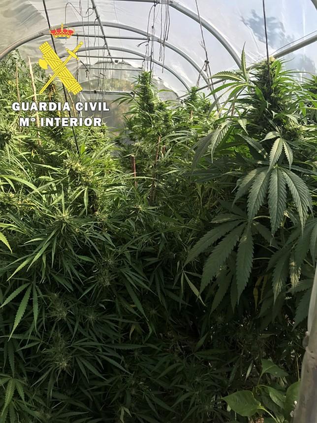 Marihuana en el valle de tobalina diario de burgos for Plantas marihuana interior