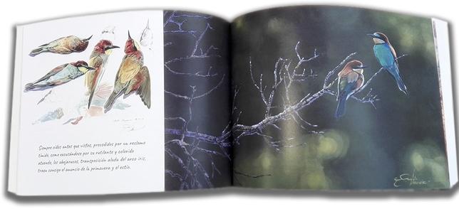 Páginas interiores dedicadas al encuentro con abejarucos