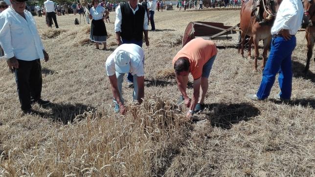 Las labores del campo vuelven a Castrillo