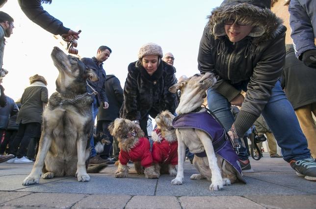 Bendición de las mascotas en San Miguel.