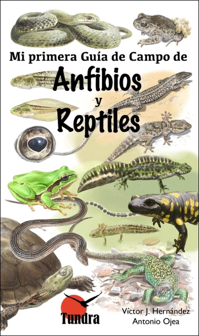 Portada de Mi primera guía de campo de Anfibios y reptiles, de Tundra