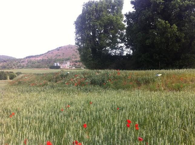 Márgenes de un campo de cultivo CSIC