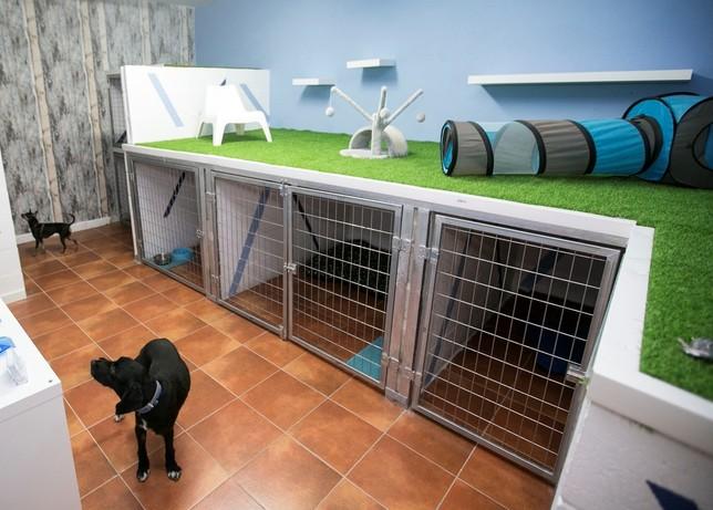 """Cielo Animal incinera 700 mascotas en su primer año Ã""""scar Navarro"""