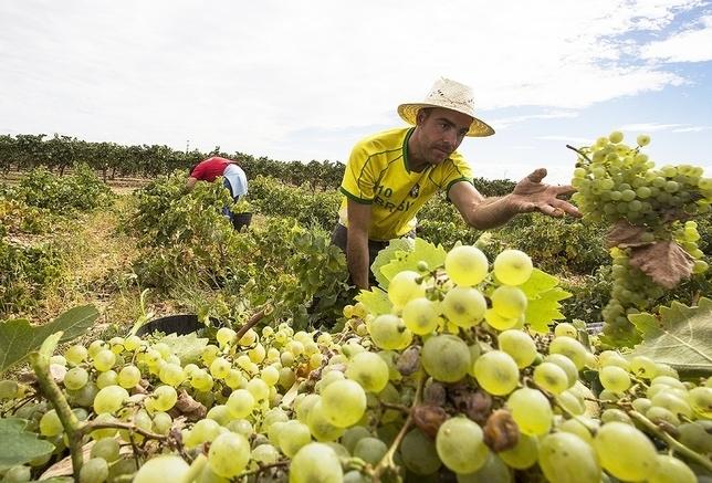 Asaja pide detallar las existencias de vino por producción
