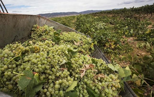 Imagen de unos de los viñedos de la provincia en la campaña de este año.