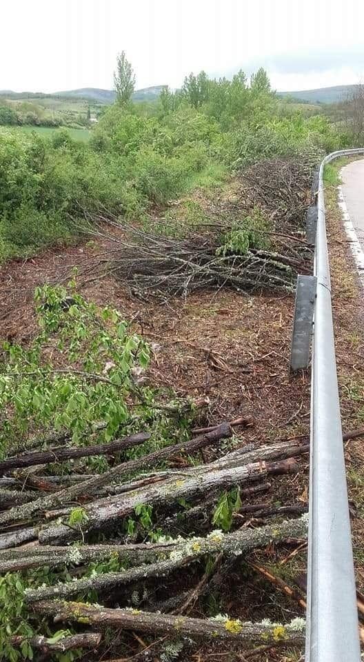 Denuncian la tala de acacias centenarias