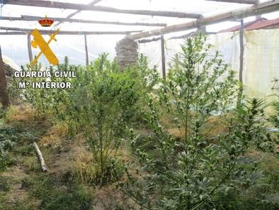 Ocho imputados en tres operaciones en la provincia por cultivar marihuana