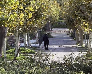 Talan siete árboles de 15 metros en Las Moreras por riesgo de caída