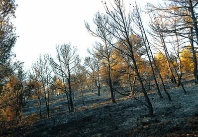 El piloto de un helicóptero muere en la extinción de un incendio en Alpera