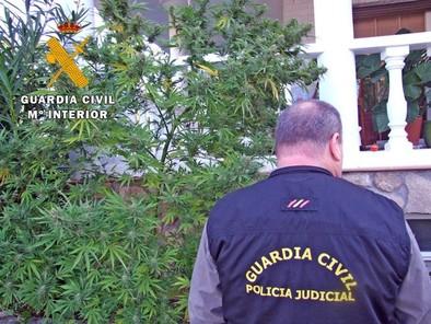 Detenidos dos vecinos de Arenas acusados de tener una plantación de marihuana en el jardín