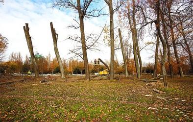Comienza la tala de chopos en la Quinta, la zona con más riesgo de caída