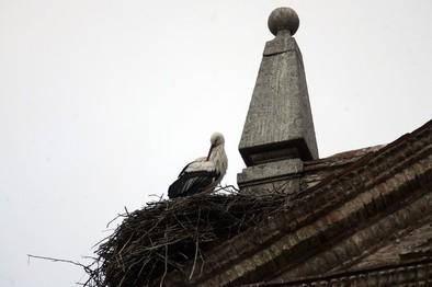 Arrabal cree que los nidos de cigüeña no causan excesivos perjuicios
