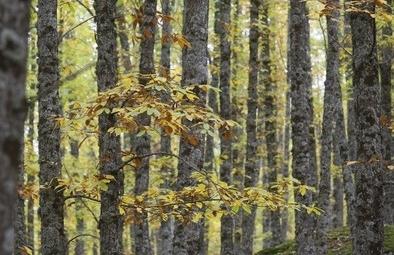 Abierto por otoño
