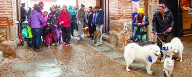 200 caminantes con sus mascotas