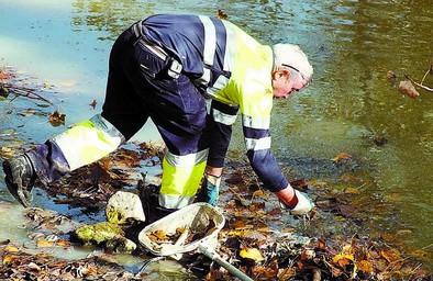 Mueren cientos peces en el Bayas tras un vertido de la azucarera