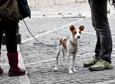 El alcalde da un toque a los dueños de perros para que limpien sus heces