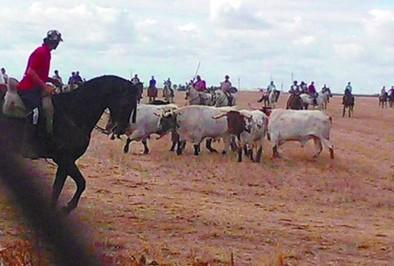 Más de 60 jinetes en el encierro a caballo