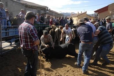 Fiesta herrera en Gredos