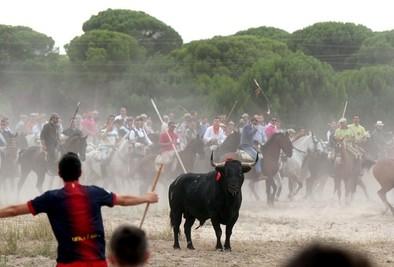 El Toro de la Vega se rebela contra el PSOE