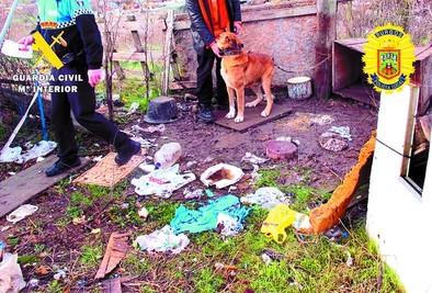 Rescatan a 3 perros sometidos a penosas condiciones en El Encuentro