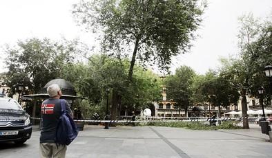Una herida leve y cortes en Zocodover por la caída de dos ramas de árboles