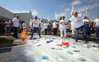 Los ganaderos inician la 'batalla' para la defensa del sector lácteo