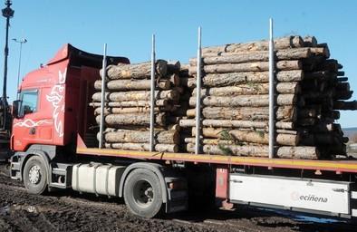 El sector maderero pide que sus tráilers carguen hasta 17 toneladas más