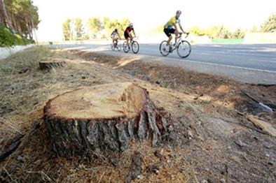 La retirada del arbolado despeja el camino a la autovía de Los Llanos