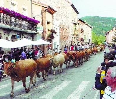 Las vacas se pasean por las calles serranas
