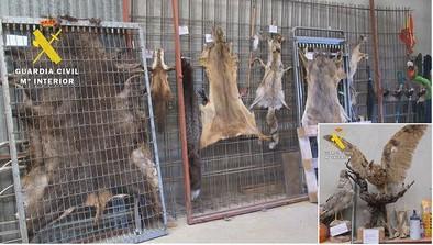 El Seprona interviene dos animales naturalizados y siete pieles curtidas en un garaje de La Ribera