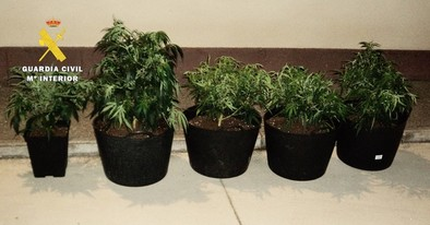 Se da a la fuga tras una aparatosa persecución al ser sorprendido con 5 plantas de marihuana en Pradoluengo