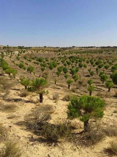 28.500 hectáreas forestadas