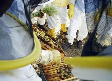 Apicultura, panadería y pasta fresca serán los temas de los cursos ambientales