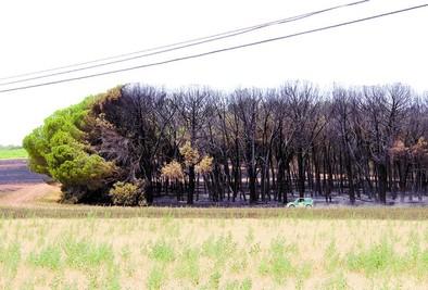 Una cosechadora ocasionó el fuego que afectó a Valdezate y Nava de Roa