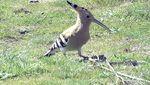 El cambio climático es una grave amenaza para las aves