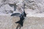 Es ilegal destruir nidos de golondrinas, aviones o vencejos