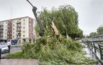 Rachas de viento de 72 km/h partieron ramas y cristales el pasado viernes.