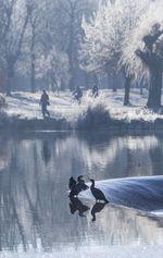 Dos cormoranes en las frías aguas del Arlanzon junto a la playa de Fuentes Blancas