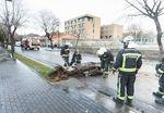 El fuerte viento provocó la caída de un árbol contra una furgoneta en marcha en la calle Reina Leonor