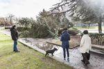 Los árboles y ramas caídas fueron contantes el fin de semana