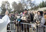 Huelgas también celebra la fiesta de su patrón, San Antón, bendiciendo a los animales.