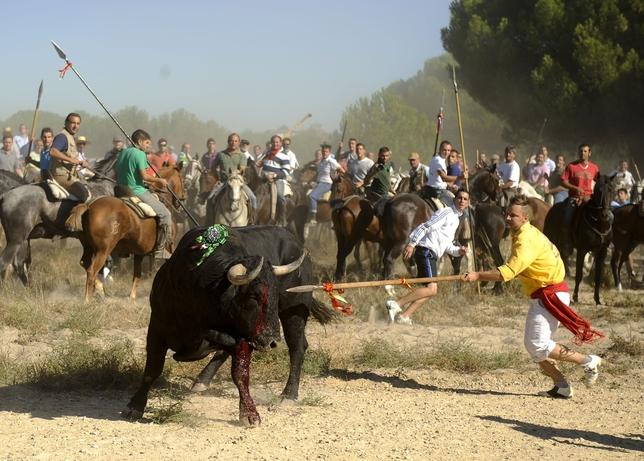 Galería de fotos del Torneo del Toro de la Vega 2014