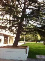 Los vecinos vemos día a día crecer la grieta de la jardinera por el peso del gran árbol inclinado y hemos avisado al Ayuntamiento. Habrá que esperar a que caiga sobre alguien y le dañe para que se cambie al responsable de jardines y al alcalde como en Madrid.